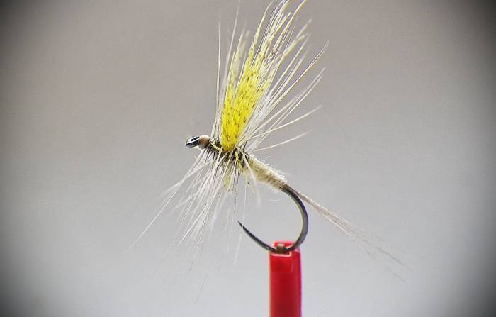 Light Cahill Dry Fly
